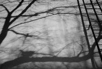 trees, shadow